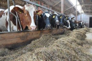 water treatment solutions for dairy farms